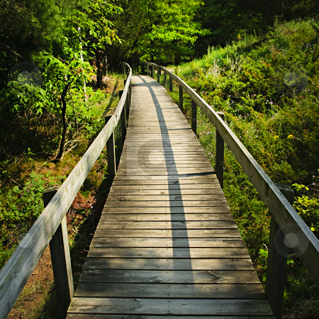 Wooden walkway through forest stock photo, Wooden path through forest. Pinery provincial park, Ontario Canada by Elena Elisseeva