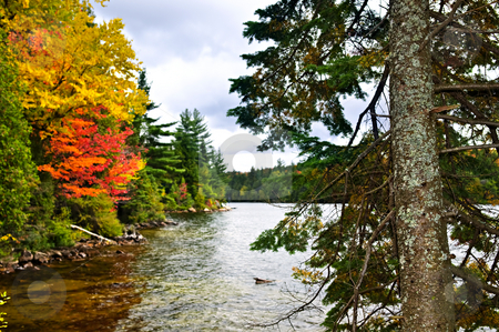 Fall forest and lake shore stock photo, Lake shore of fall forest with colorful trees by Elena Elisseeva