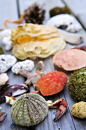 Sea treasures stock photo, Different types of marine life from Atlantic ocean in Newfoundland, Canada by Elena Elisseeva