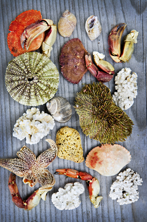 Sea treasures stock photo, Background with different types of marine life from Atlantic ocean in Newfoundland, Canada by Elena Elisseeva