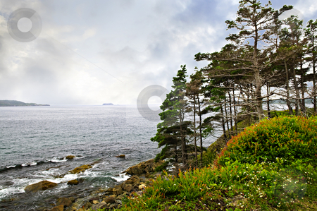 Atlantic coast in Newfoundland stock photo, Scenic coastal view of rocky Atlantic shore with trees in Newfoundland, Canada by Elena Elisseeva