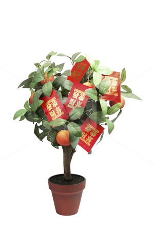 Tangerine Plant with Red Packets stock photo, Tangerine Plant with Red Packets on White Background by Lai Leng Yiap