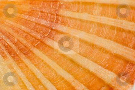 Muschel - Shell stock photo,  by Wolfgang Heidasch
