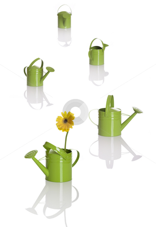 Watering cans stock photo, Multiple watering cans in DOF and the first one have a gerbera flower by ikostudio