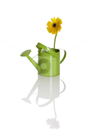 Green watering can with a flower stock photo, Green watering can with a flower isolated on white by ikostudio
