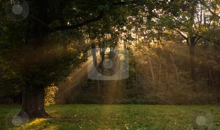 Sunrays through the trees in autumn stock photo, Sunrays through the trees on early autumn morning by Colette Planken-Kooij