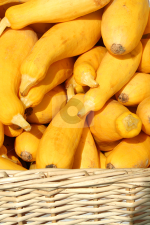 Yellow squash in a basket stock photo, Some Yellow squash in a basket by Jim Mills