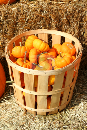 Bunch of gourds in a basket stock photo, Bunch of gourds in a basket with hay by Jim Mills