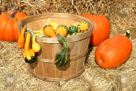 Bunch of gourds in a basket with hay stock photo, Bunch of pumpkins  gourds in a basket by Jim Mills