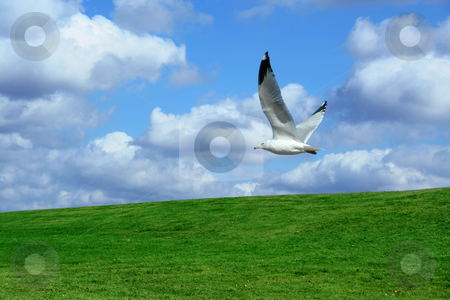 Field and cloudy sky stock photo, A Green Field and cloudy blue sky by Jim Mills