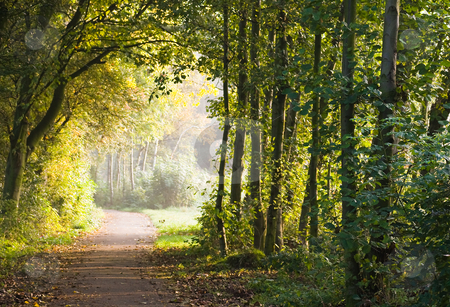 Path in forest stock photo, Path in forest in the early morning sun by Colette Planken-Kooij