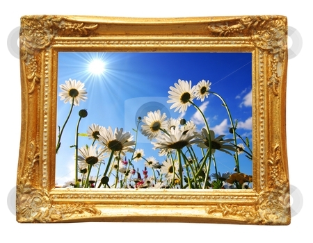 Flowers stock photo, Flower or summer concept with image frame isolated on white background by Gunnar Pippel