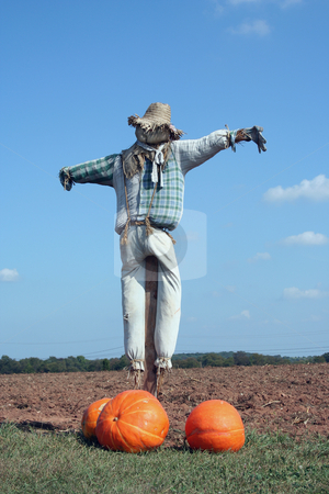 Scarecrow and pumpkins stock photo, A Scarecrow and pumpkins on a farm field by Jim Mills