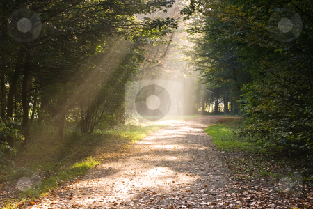 Rays of sunlight on the path stock photo, Rays of sunlight on the path in the forest by Colette Planken-Kooij