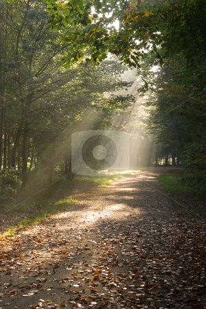 Sunbeams in autumn forest stock photo, Sunbeams are falling through the trees in autumn forest by Colette Planken-Kooij