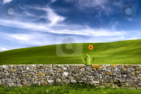 Flower in the green land stock photo, Green watering can over a stone wall on a beautiful green meadow by ikostudio