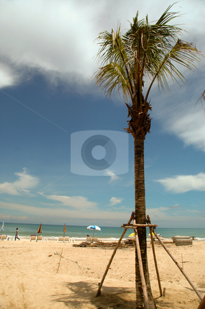 Beach and palmtree stock photo, Beach and palmtree by Lars Christensen