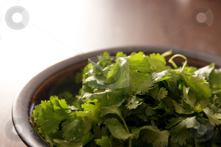Bowl of Cilantro stock photo, A bowl of fresh cilantro (coriander) leaves. by Chris Hill