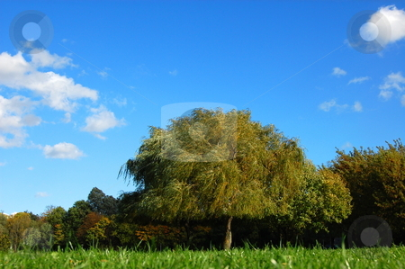 Forest and garden under blue sky at fall stock photo, Green trees of a park at summer or autumn under blue sky by Gunnar Pippel
