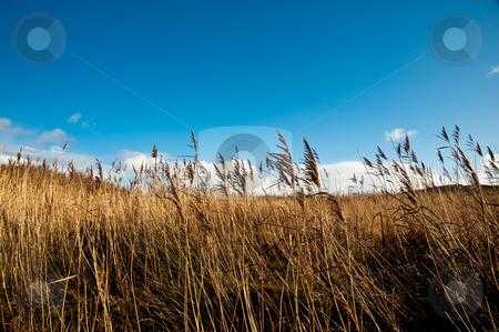 Field stock photo, Field and sky on Islay, Scotland by Jaime Pharr