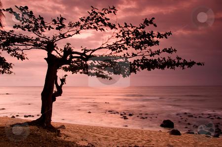 Equator Beach stock photo, Beautiful sunset of an amazing beach in Sao Tom? - Equator by ikostudio