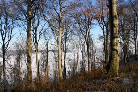 Autumn forest stock photo, Leafless forest in the autumn in the mountains by P?