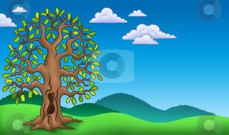 Landscape with oak tree stock photo, Landscape with oak tree - color illustration. by Klara Viskova