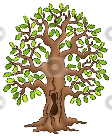 Oak tree stock photo, Oak tree on white background - color illustration. by Klara Viskova