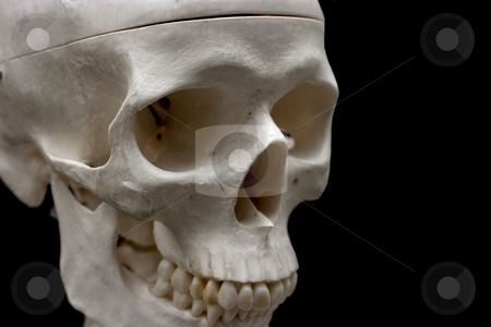 Skull stock photo, Closeup of a plastic skull isolated on black by P?