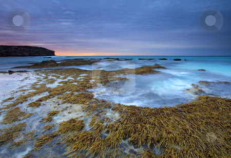 Seaweed Sunrise stock photo, Sunrise under stormy skies at Pennington Bay, Kangeroo Island, South Australia. by Mike Dawson