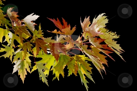 Leaves stock photo, A bunch of colorful autumn leaves by P?