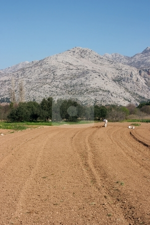 Farming stock photo, Agricultural work in the spring in Croatia by P?