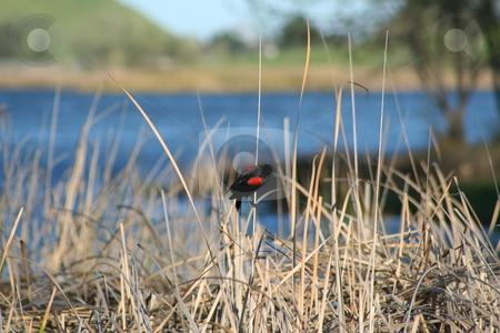 Small Bird stock photo,  by Michael Felix