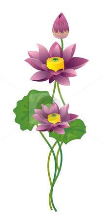 Lotus stock photo, Purple Lotus on white background by Su Li