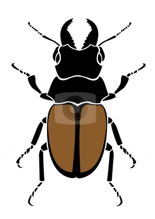 Beetle stock photo, Drawing of beetle in a white background by Su Li