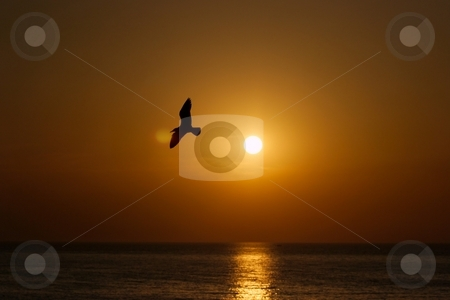 Sunset stock photo, Sunset at the sea with the silhouette of a seagull by P?