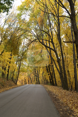 Autumn Tree Canopy stock photo, The golden colors of the autumn trees form a canopy over a rural road in Illinois. by Martha Marcotte