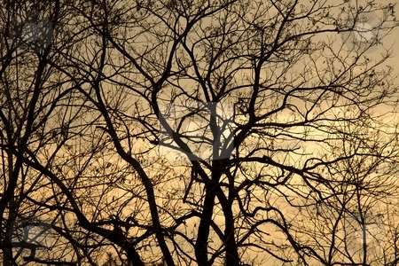 Trees stock photo, Bare, leafless branches of a tree in winter by P?