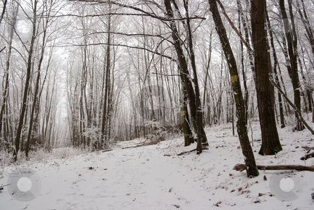 Winter stock photo, Winter forest with frosty trees by P?