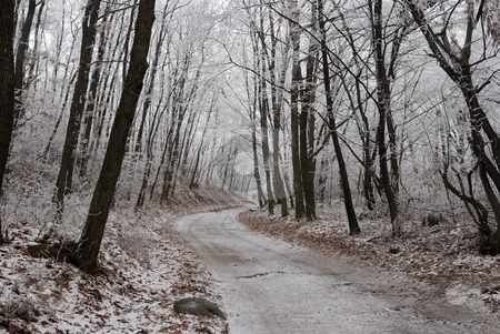 Forest stock photo, Frosty winter forest with a path through it by P?