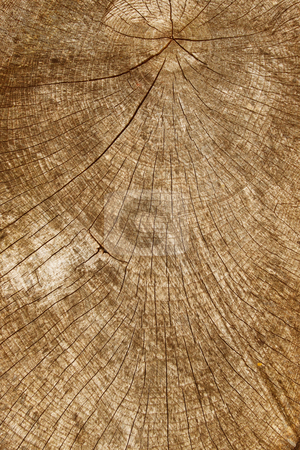 Tree stump wood rings close up. stock photo, Tree stump wood rings close up. by Stephen Rees