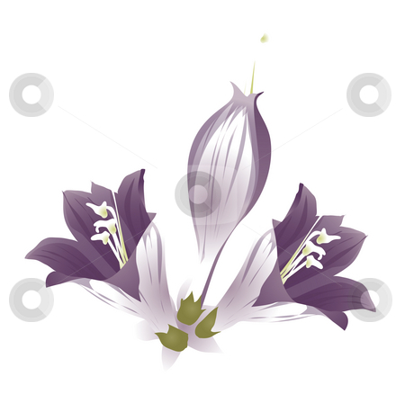 Purple flower stock photo, Three  purple orchid on the white background by Su Li