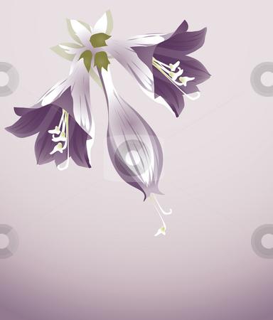 Purple flower stock photo, Three  purple orchid on the purple background by Su Li