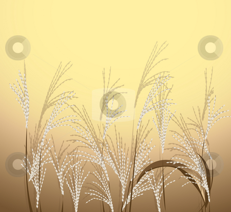 Reed stock photo, Stem reed on the yellow background by Su Li