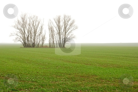 Fog stock photo, Green filed with bare trees fading into the fog by P?