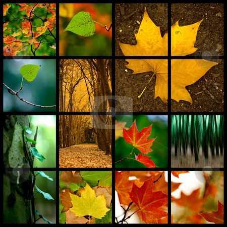 Autumn Theme stock photo, Autumn themed collage - Beautiful colored fall pictures by ikostudio