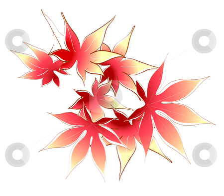 Maple leaves stock photo, A group of maple leaves on a white background by Su Li