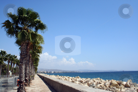 Cyprus coastline and palm trees stock photo, Palm trees lining coastline in summer with defensive rock formation by sea, Cyprus. by Martin Crowdy