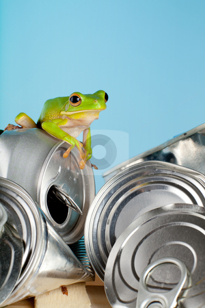 Ecology frog stock photo, Ecology or environment image of a white-lipped tree frog on garbage by Anneke