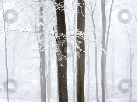 Fog stock photo, Fog in the frosty winter forest by P?